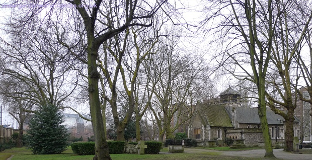 St Pancras Old Church Hardy Tree