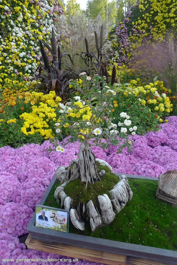 jogseya temple bonsai chrysanthemum seoul