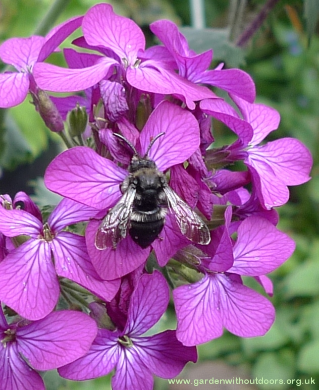 black bee on honesty