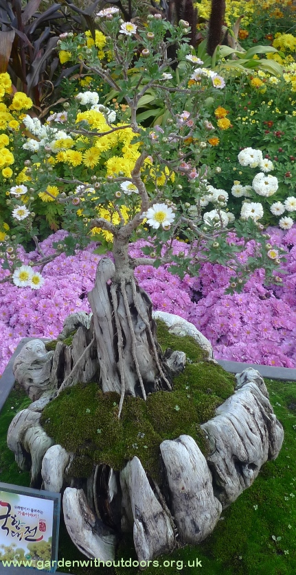 jogseya temple chrysanthemum bonsai seoul
