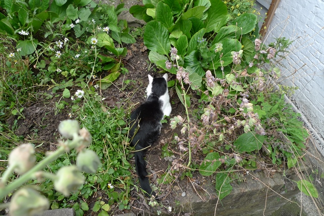 hollyhock seedlings and cat