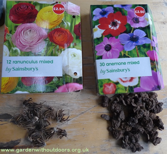 ranunculus tubers and anemone bulbs