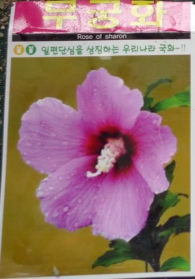 rose of sharon seed jpacket